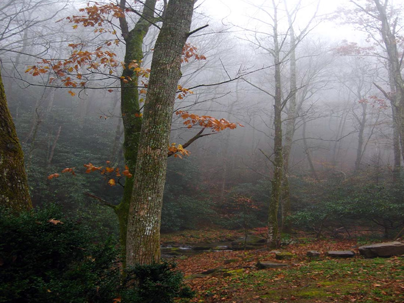 Magical Mist Hickory Nut Forest Appalachia North Carolina