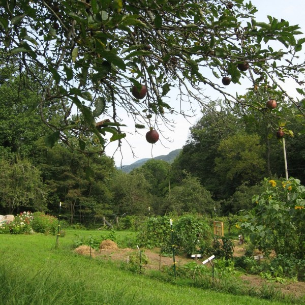 View down the gorge from the garden and orchard