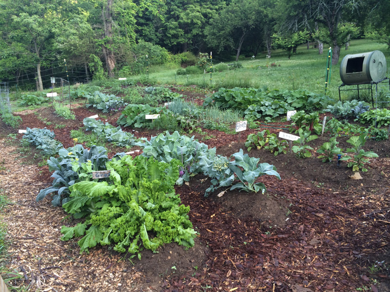Hickory Nut Forest community garden 2014