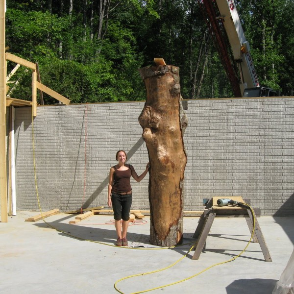 Big birch gets a new home in the basement