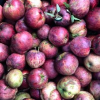 Hickory Nut Forest organic apples