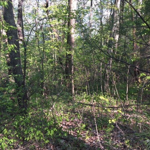 Hickory Nut Forest Lot 16