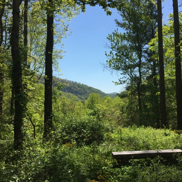 Hickory Nut Forest Lot 17
