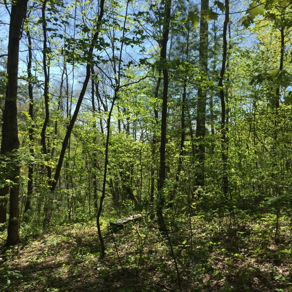 Hickory Nut Forest Lot 18