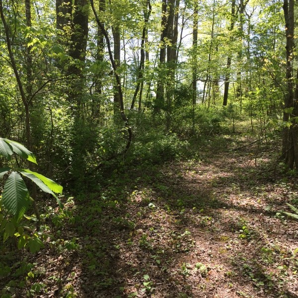 Hickory Nut Forest Lot 19