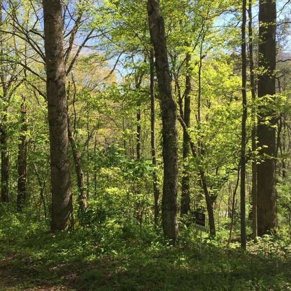 Hickory Nut Forest Lot 20