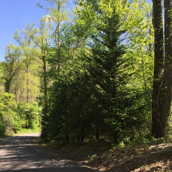 Hickory Nut Forest Lot 21