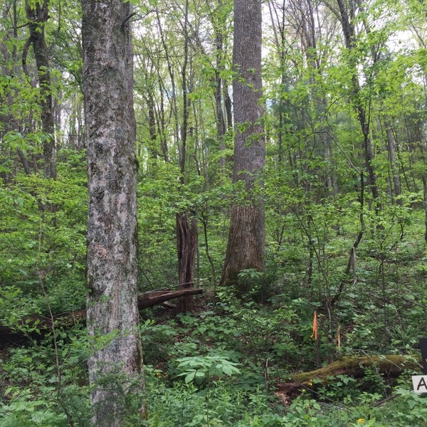 Hickory Nut Forest Lot 22