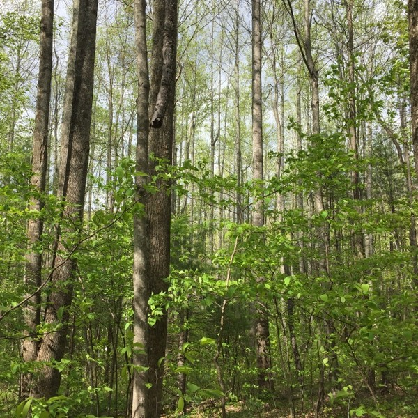 Hickory Nut Forest Lot 5