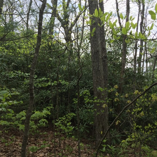 Hickory Nut Forest Lot 8